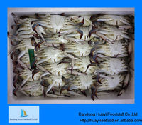 Supply size of live frozen Blue swimming crab