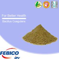 Bulk Raw Materials Probiotic Powder Bacillus Coagulans