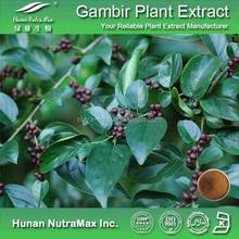 100% Natural Gambir Plant Powder Extract, Rhynchophylla Total Alkaloids(RTA), Uncaria Alkaloids