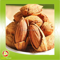 Factory wholesale high quality green almond fruit