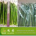 2015 China Original de camote IQF Frozen espárragos caliente venta