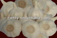 new crop of white garlic supplier