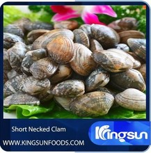 Hot Sale Clams With Shell
