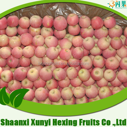 Fresh gala apple, Chinese crop 2015 export to Middle east market