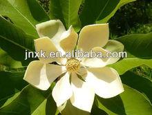 honokiol magnolia officinalis bark extract