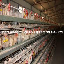 professional galvanized metal multi-tier chicken cage