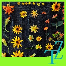 Hydrophilic spunbond pp woven weed control mat/fabric/fleece/cover/blanket