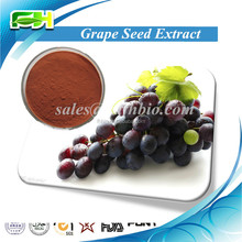 High ORAC Value Natural Grape Seed Extract 95%,Vitis vinifera,Grape Seed Extract