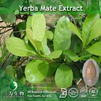 25% Yerba Mate Extract Polyphenol for health care