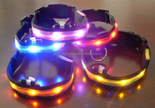 LED dog collar and dog leash light up in the night