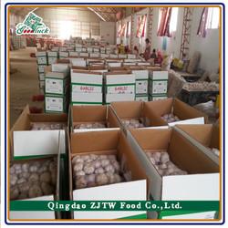 Fresh Vegetables White Garlic Supplier