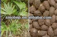 Buy Natural Saw Palmetto Extract
