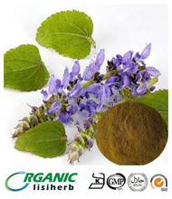 GMP factory supply high quality forskolin capsules / Coleus forskohlii extract