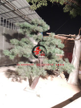 artificial pine tree / fake pine branches / artificial pinaster with water proof UV protected