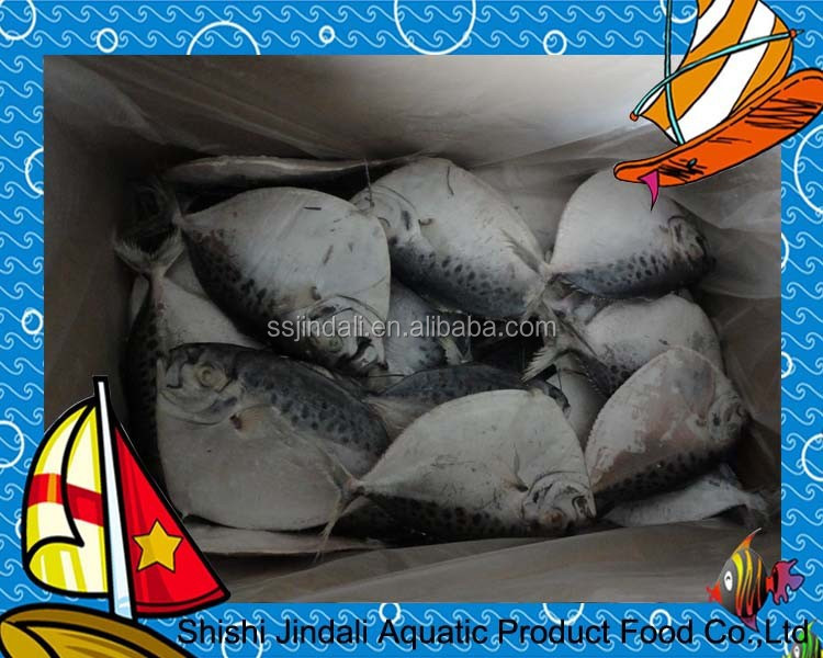Frozen moon fish frozen flat fish frozen fish buy frozen for Opah fish price