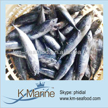 Hot Selling 18 months Shelf Life Good Quality About Bonito Fish