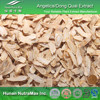 Hot Selling Angelica/Dong Quai Extract 10:1
