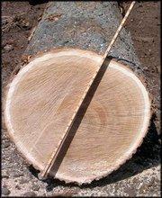 Red Oak veneer logs