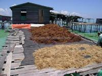 Cottonii Seaweeds