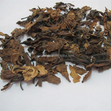 100% bulk Plumeria rubra