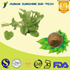 China Supplier Cosmetic Ingredients Anti-oxidant Lemon Balm Extract