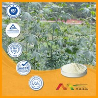 Wholesale and 100% natural new sweetner sweet tea extract powder