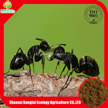 GOOD NEWS!!! Black Ant Powder with TOP Grade for Anti-HBV is Selling with Low Price Provided by Chinese Manufacture
