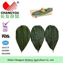 Fresh magnolia officinalis leaf