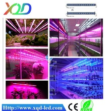 Newest DC 36V IP68 full spectrum 5050 led light 60 leds Grow Light 3.2 ft /1000mm hydroponic greenhouse LED grow light 12W