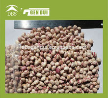 cranberry beans Light Speckled Kidney Beans new crop kidney beans