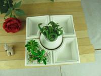 Large ceramic pots succulents combination wholesale lovely fleshy plants flowerpot Assortment