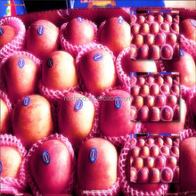 chinese 2015 fresh red delicous sweet crispy health apple Tianshui huaniu apple