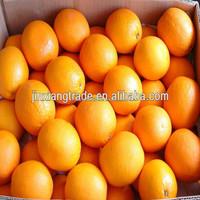 Chinese fresh Navel orange High Quality