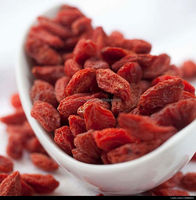 Top Quality Organic Dried Goji Berry Herb