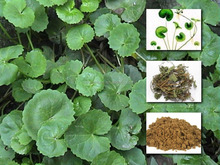 Natural Madecassic acid CAS:84696-21 Comestic ingredients//Centella Asiatica Extract/ herbal extract