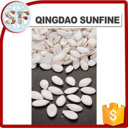 China snow white pumpkin seeds high quality pumpkin seeds supplier pumpkin seeds price