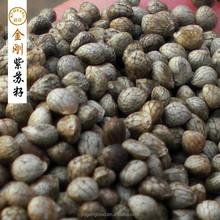 chinese perilla seeds
