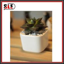 small white ceramic flower pot/coffee table ceramic flower pot
