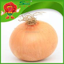Fresh golden onion in bulk