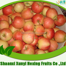 2015 bulk red Gala apple for sale from factory directly