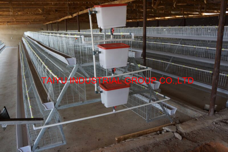 Poultry Farming Business Plan in Nigeria PDF / Feasibility Study