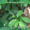 100% Natural Yerba Mate Extract Powder in large stock