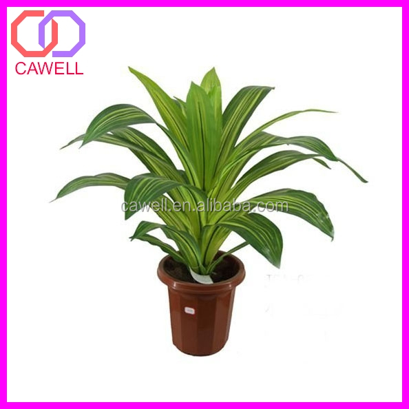 Types Of Ornamental Plants Buy Types Of Ornamental