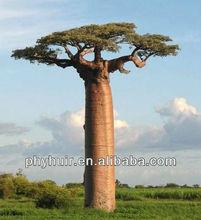 Baobab Powder/Adansonia digitata Extract Natural Vitamin C, calcium, magnesium