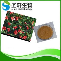 Popular rosehip extract fine powder