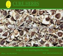 conventional Moringa oleifera seeds for sales