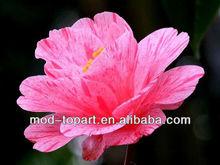Pink flower printing canvas/simple flower paintings
