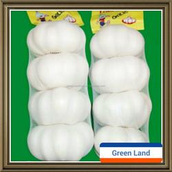 fresh new crop Chinese pure white garlic