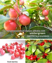 Natural Plant Extract Wintergreen Oil / Winter Green Oil ( Pure & Natural )
