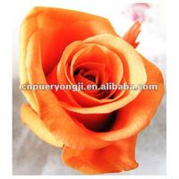 high quality preserved flower florist
